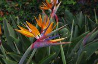 056_Botanischer_Garten2